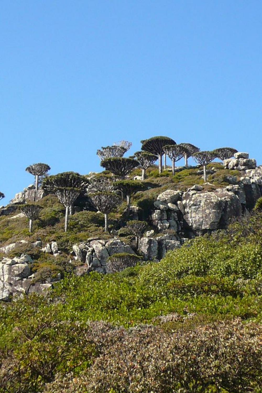 ソコトラ島の画像 p1_5