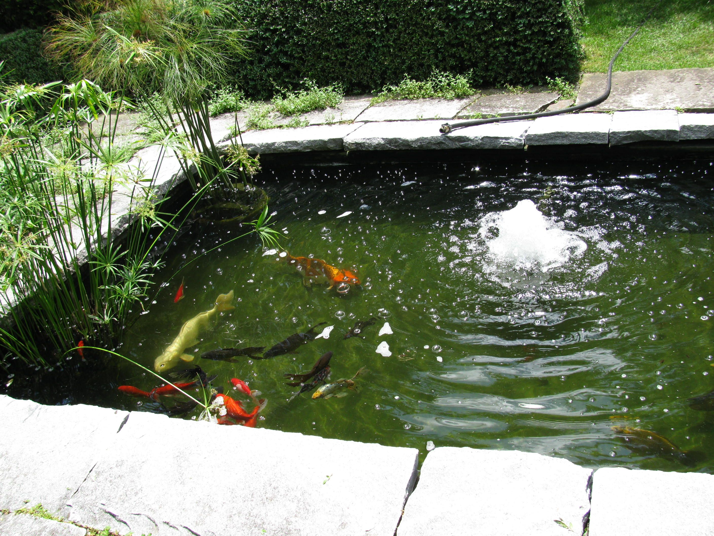 Small koi pond pools and fountains pinterest for Pool with koi pond