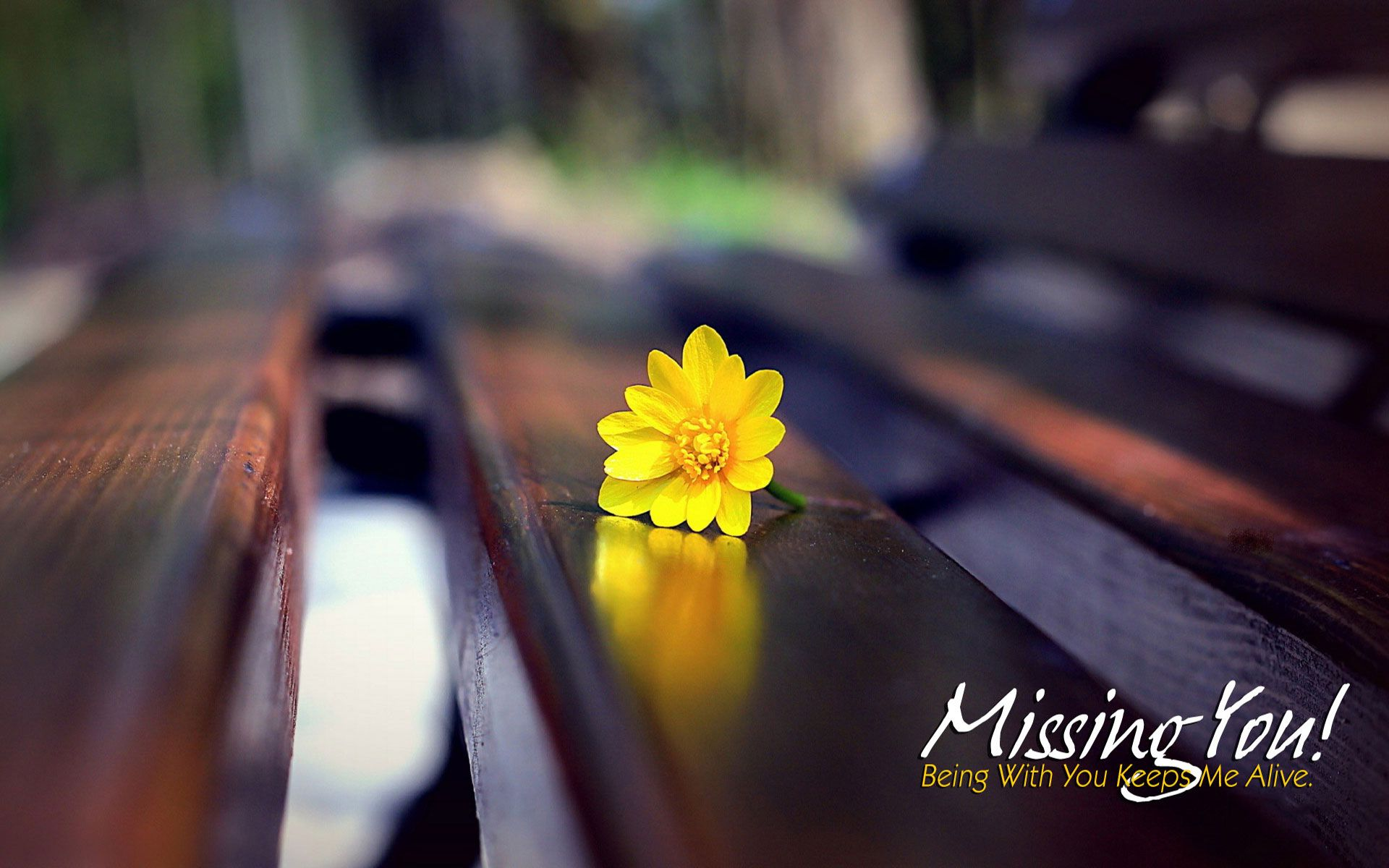 Image For Miss You Hd