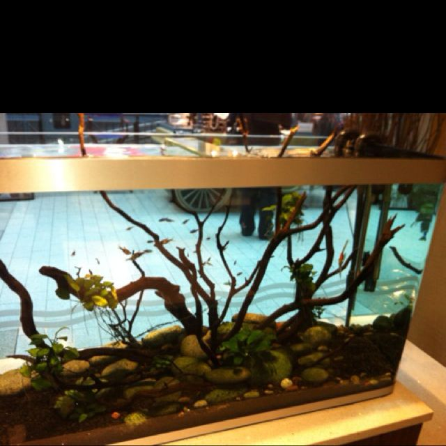 Neat fish tank My Style Pinterest