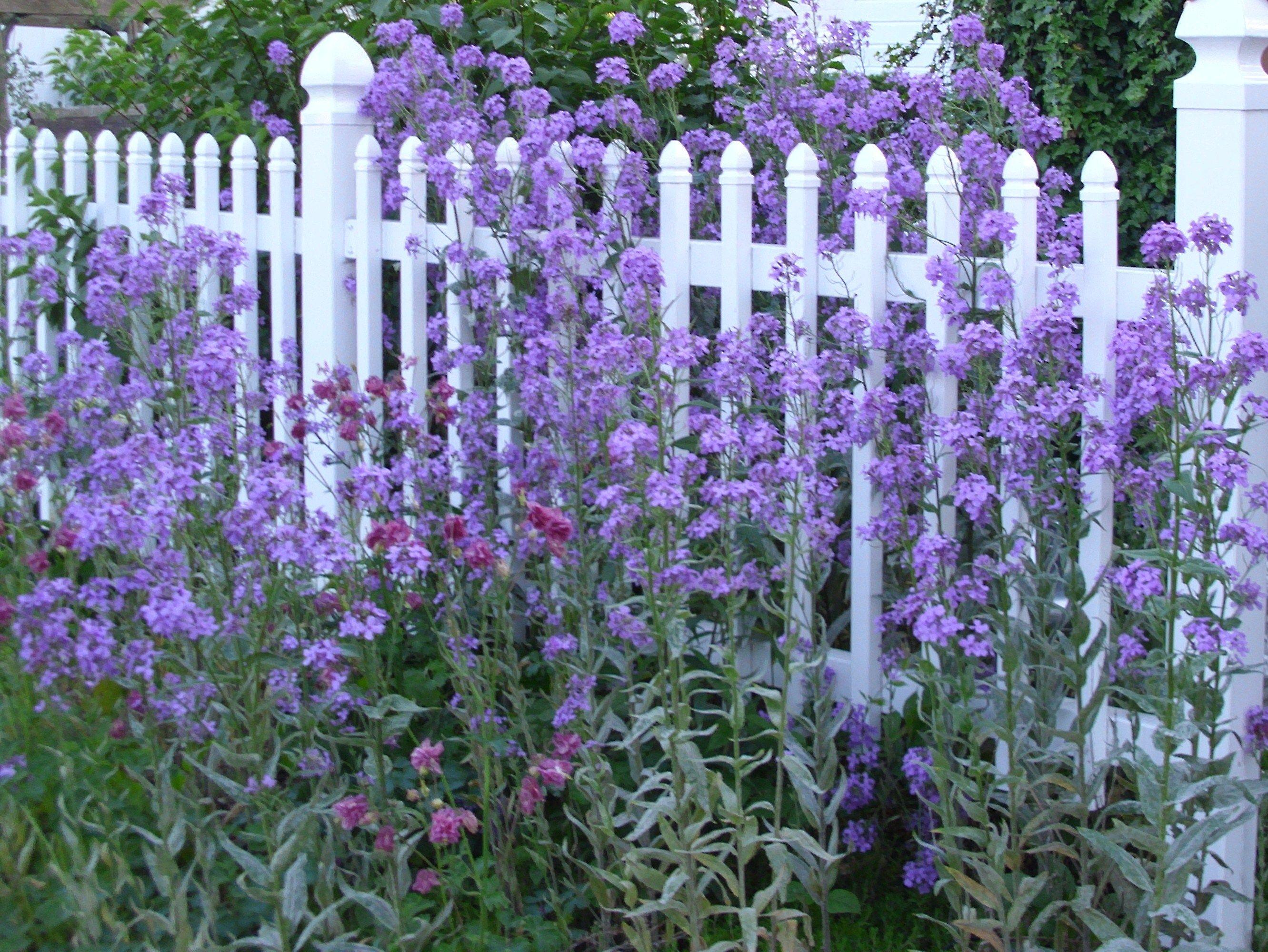 Beautiful Spring Flowers The Purple Garden Pinterest