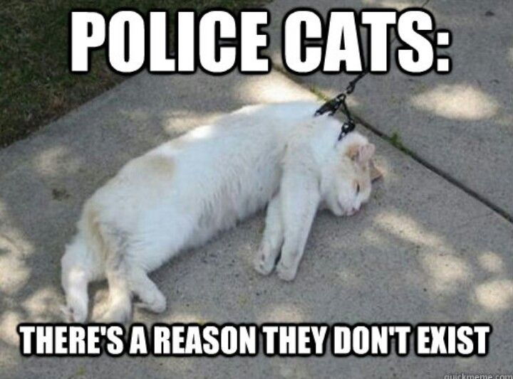 Police cats | Funnies | Pinterest