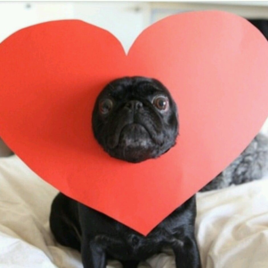 valentine's day puppy images