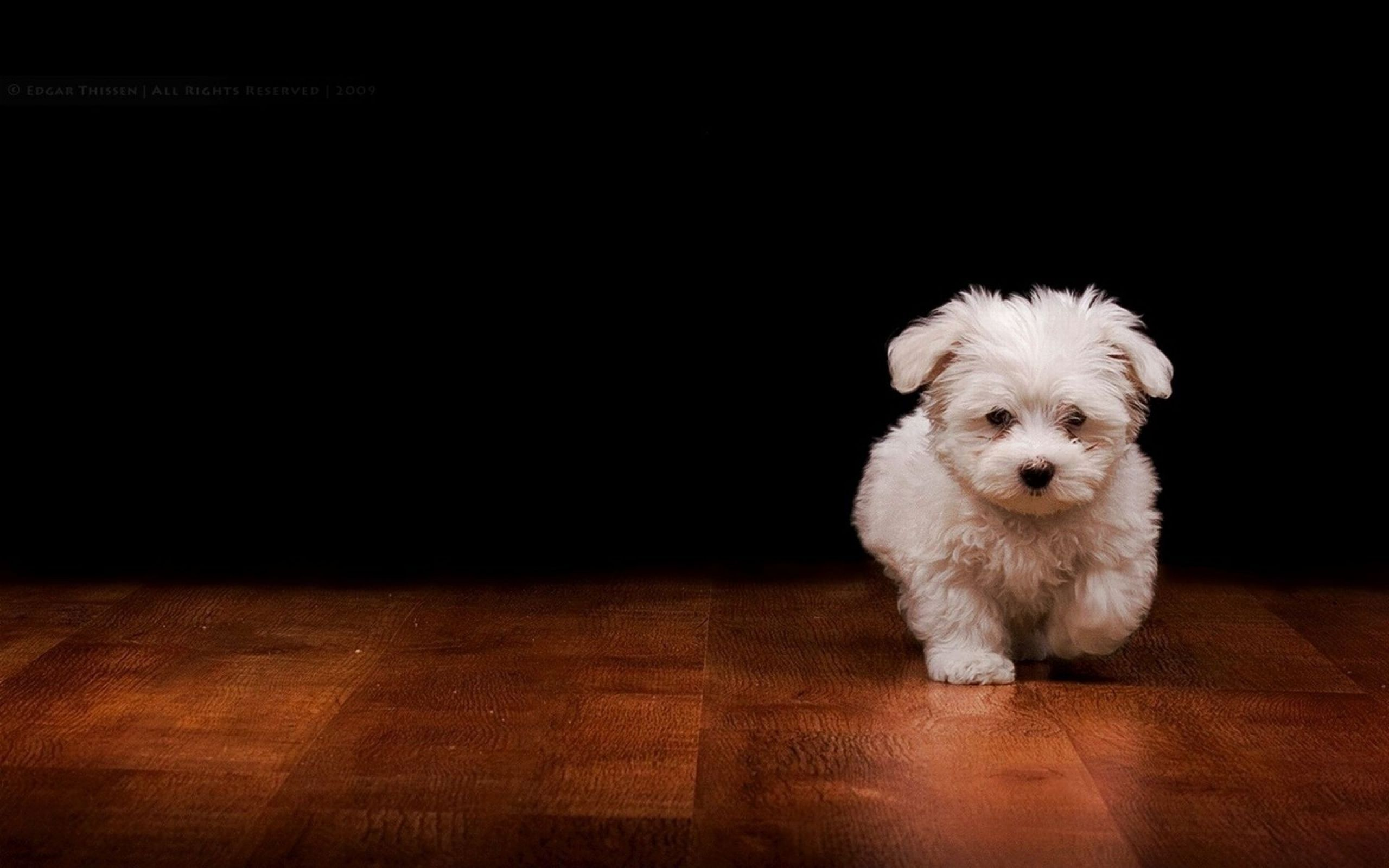Dog Wallpapers HD Puppy Wallpaper Free Dog Wallpapers