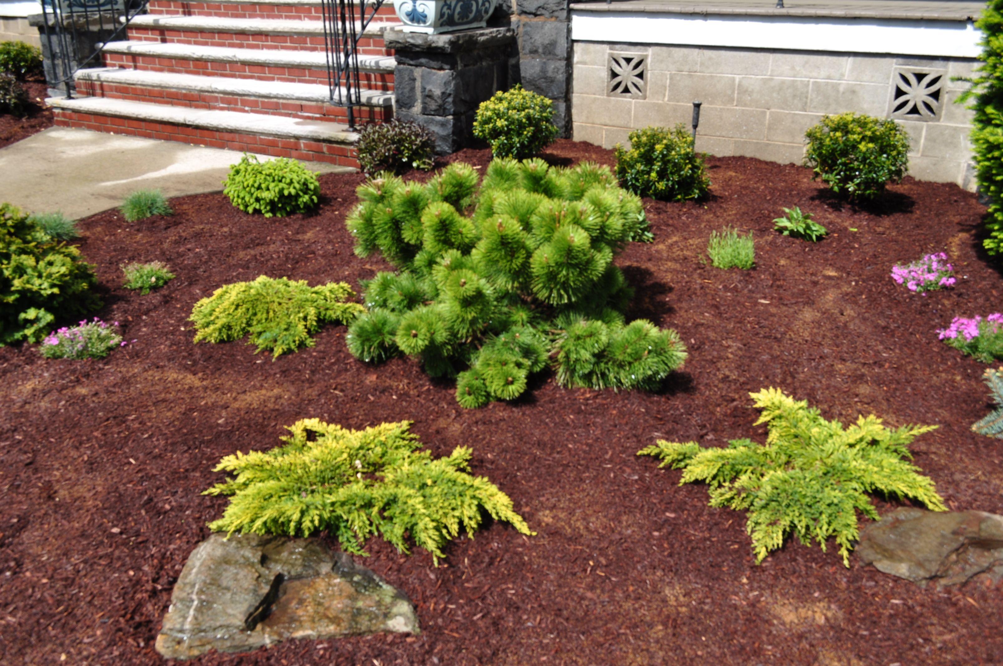 dwarf conifer garden container gardens pinterest