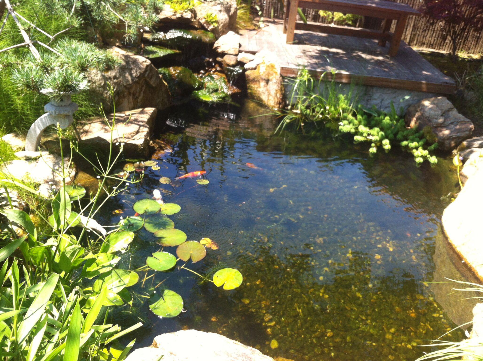 Koi pond kois at sun bathing d my japanese garden pics for My koi pond