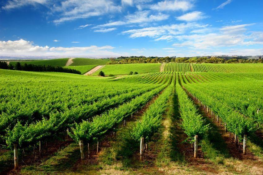 Barossa Valley South Australia Wineries Pinterest