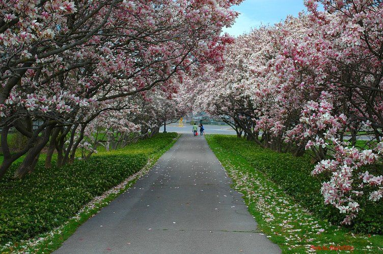 spring niagara falls botanical gardens places near me