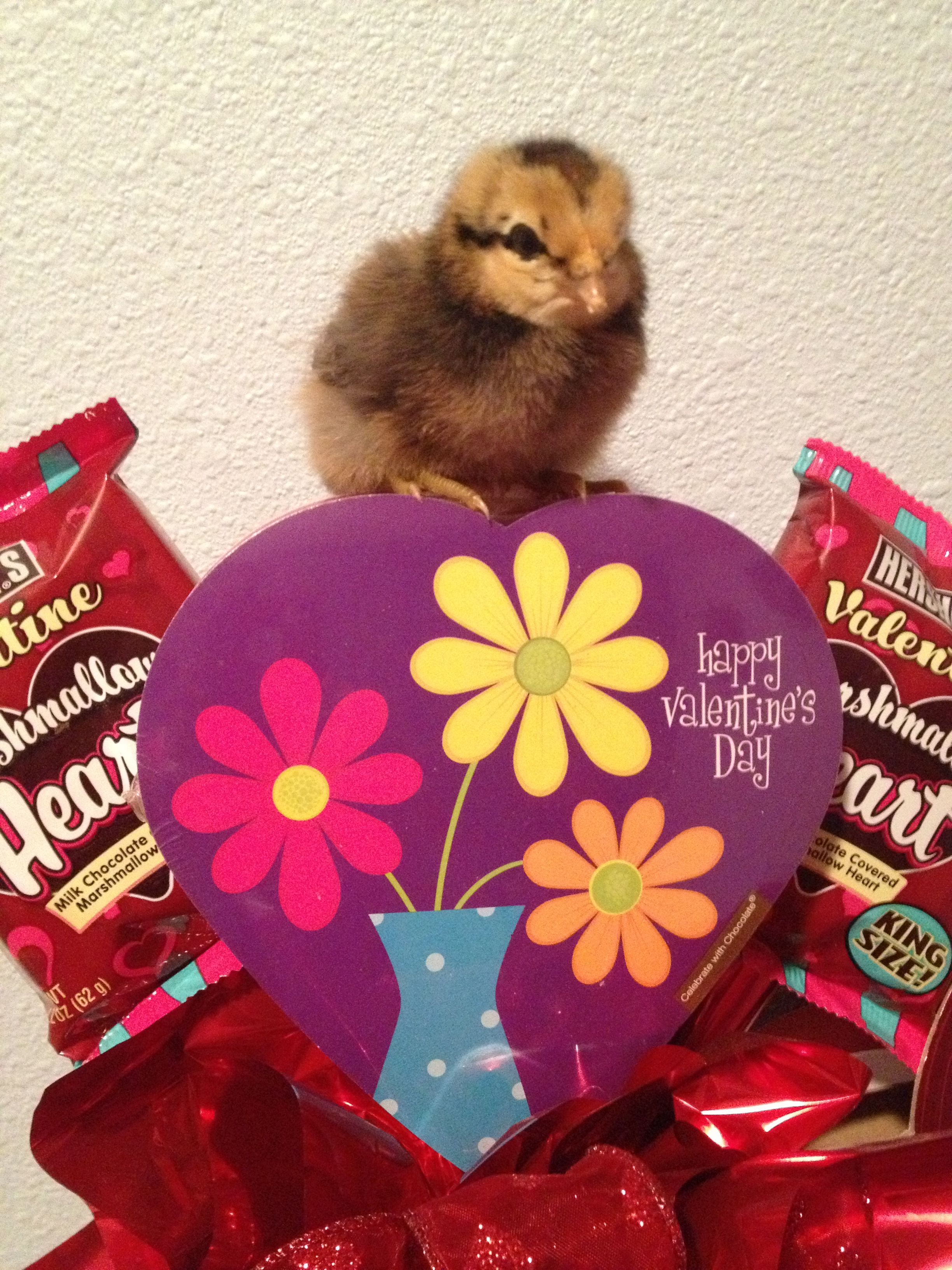 valentine's day chicken breast recipes