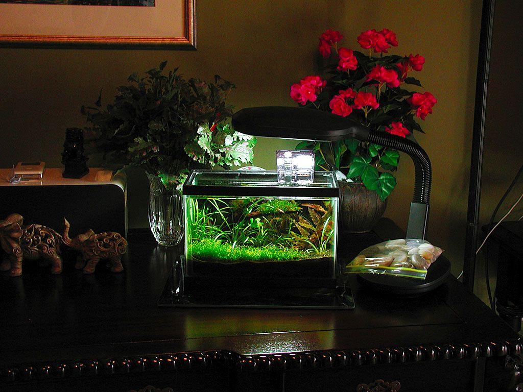 Nano planted aquarium aquarist pinterest for Plante nano aquarium