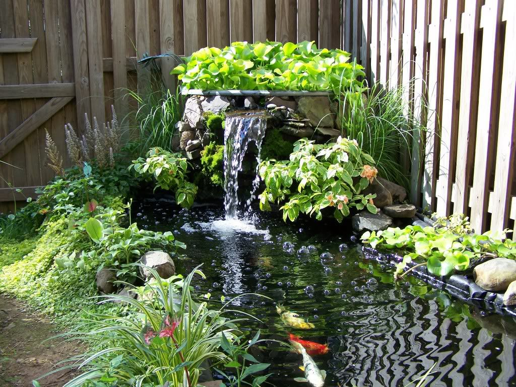Love This Small Waterfall Garden Pond And Water Features Pinter