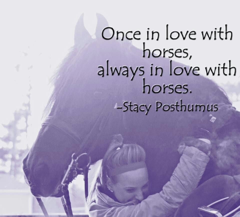 Horse love | Horse Quotes | Pinterest