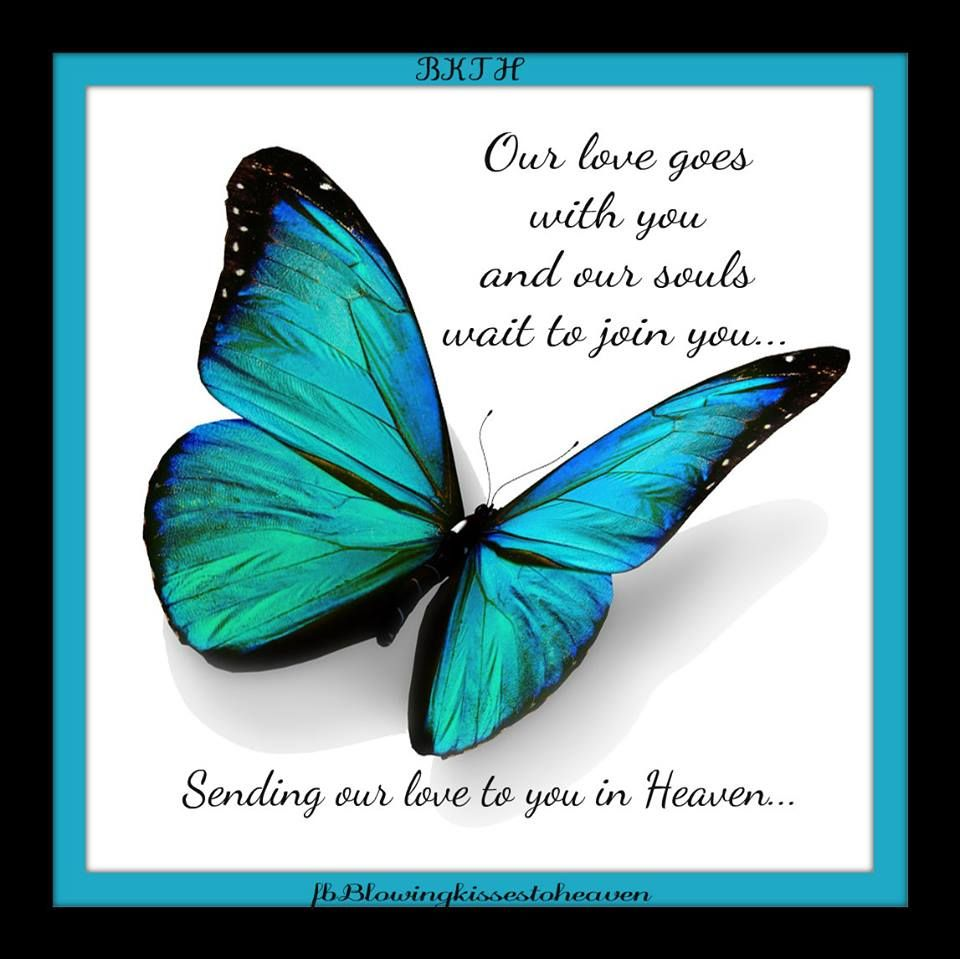 Beautiful Butterflies from Heaven | Hold me One More Time ...