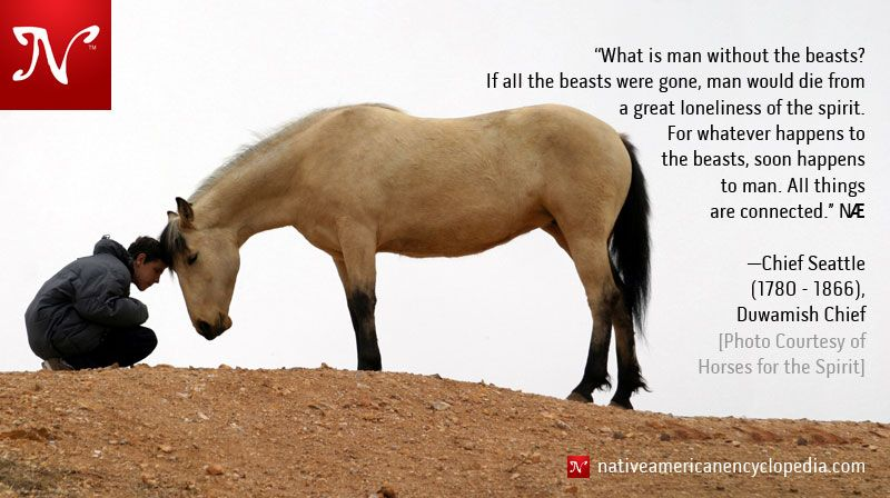 Native American Horse Quotes