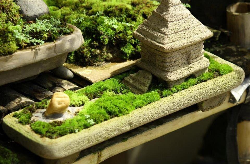 The Zen Of Moss Diy Mini Zen Garden Pinterest 400 x 300