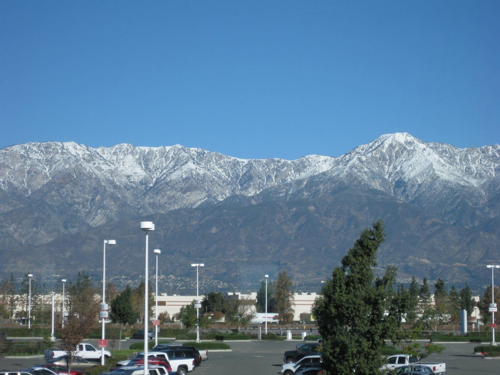 Cali Lewis photos