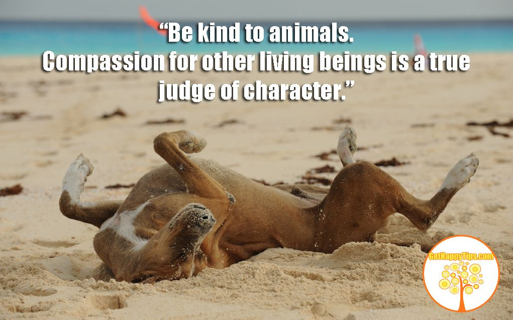 Image result for Quotes About Kindness to Animals