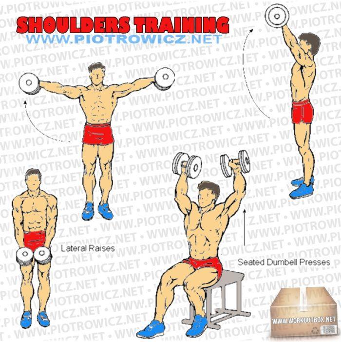 Bodybuilding exercises schedule
