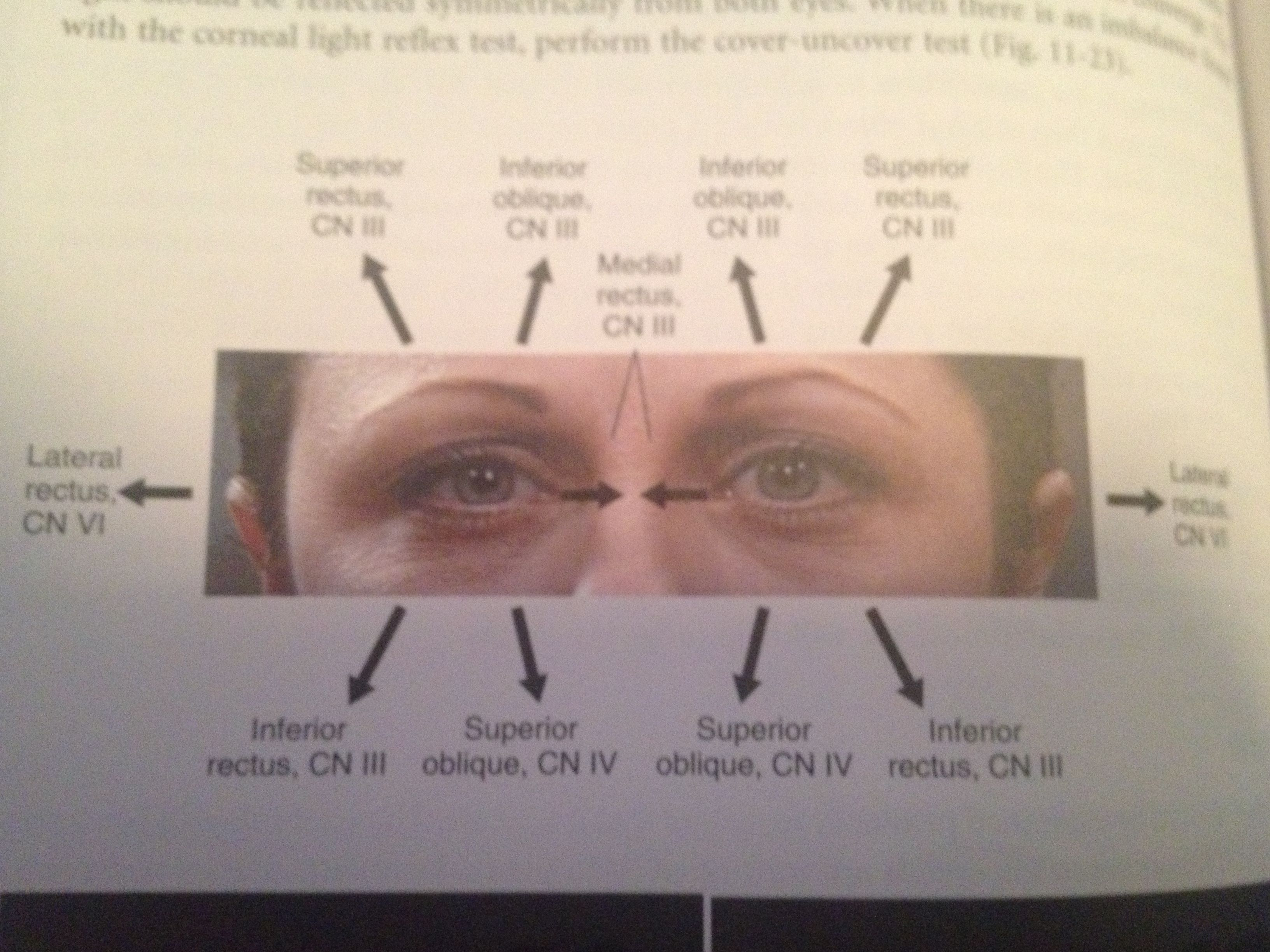 Cranial nerves tested with ocular motion nursing school pinterest