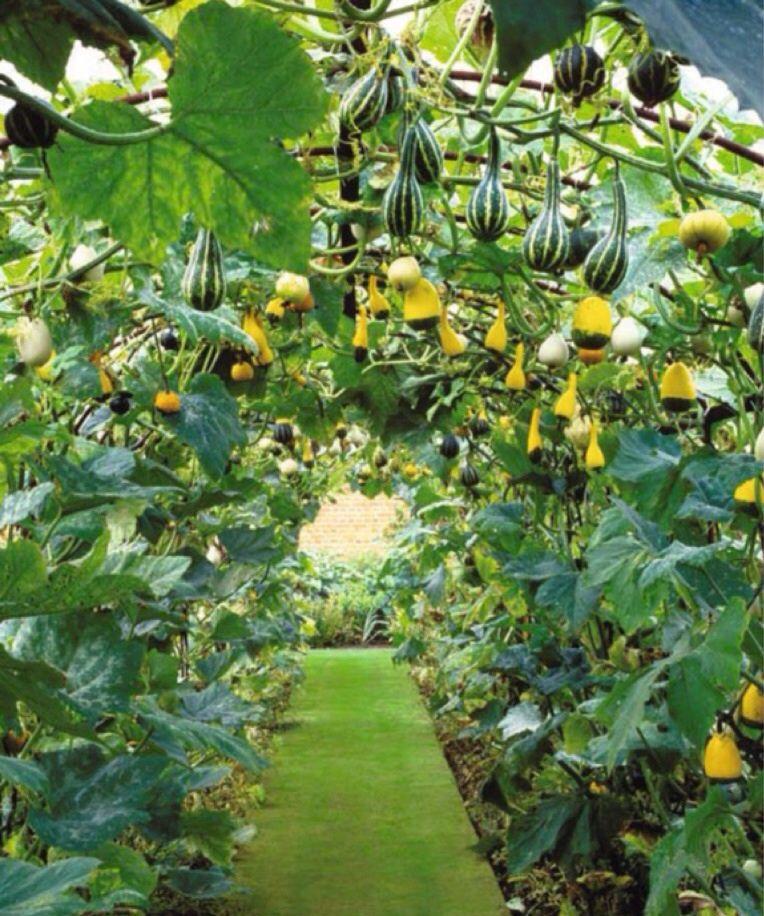 Nice and neat vertical vegetable gardens Backyard