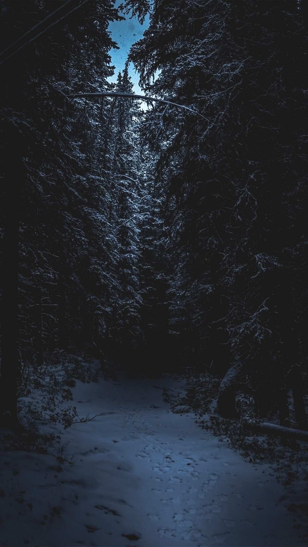 Dark Snowy Forest Iphone Wallpaper Babangrichie Org