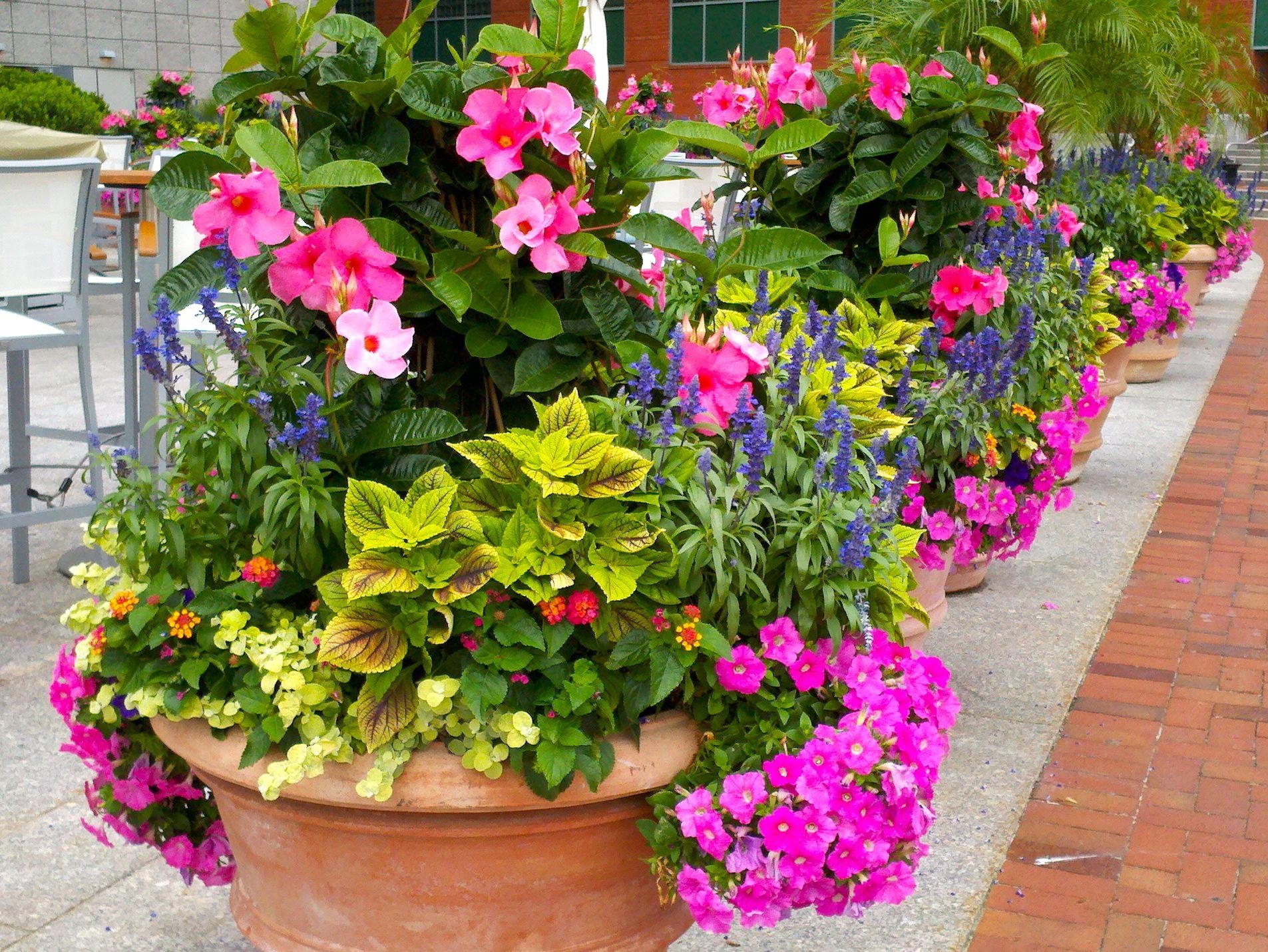 Summer container garden in boston garden ideas pinterest for Container garden ideas