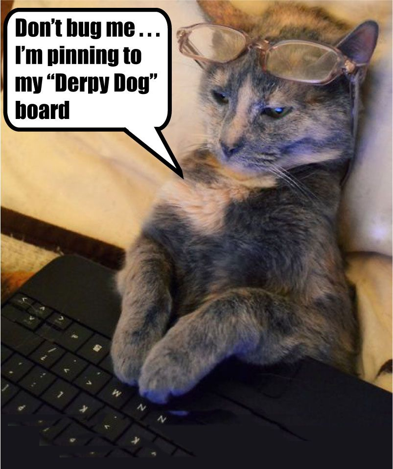 Derpy Dog Board Bad Cats A Go Go Pinterest