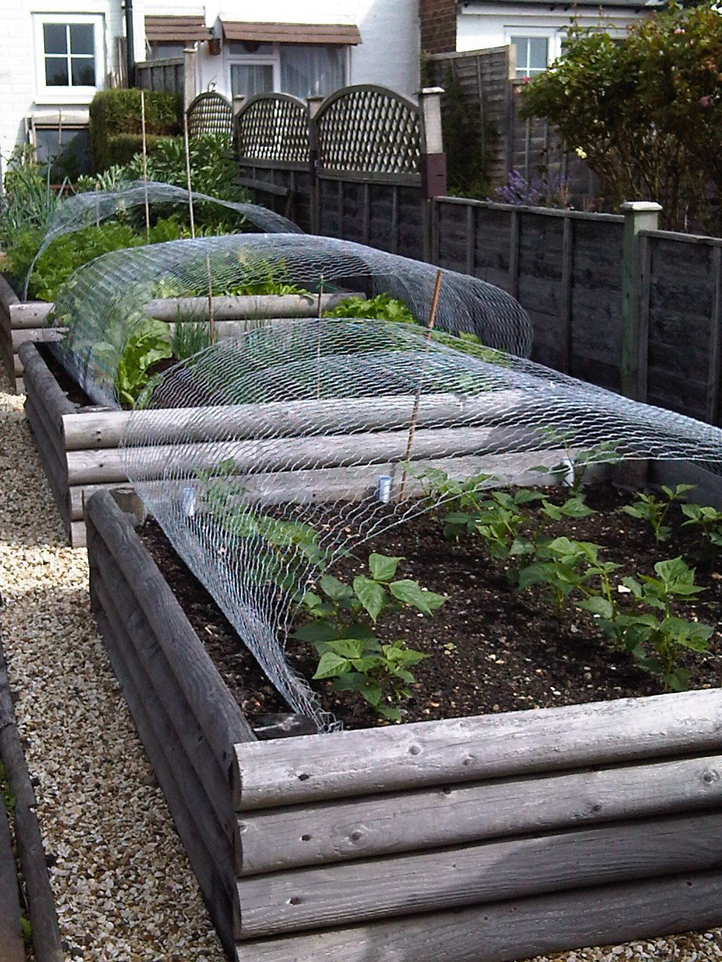Raised vegetable beds garden patio ideas pinterest for Raised vegetable garden beds