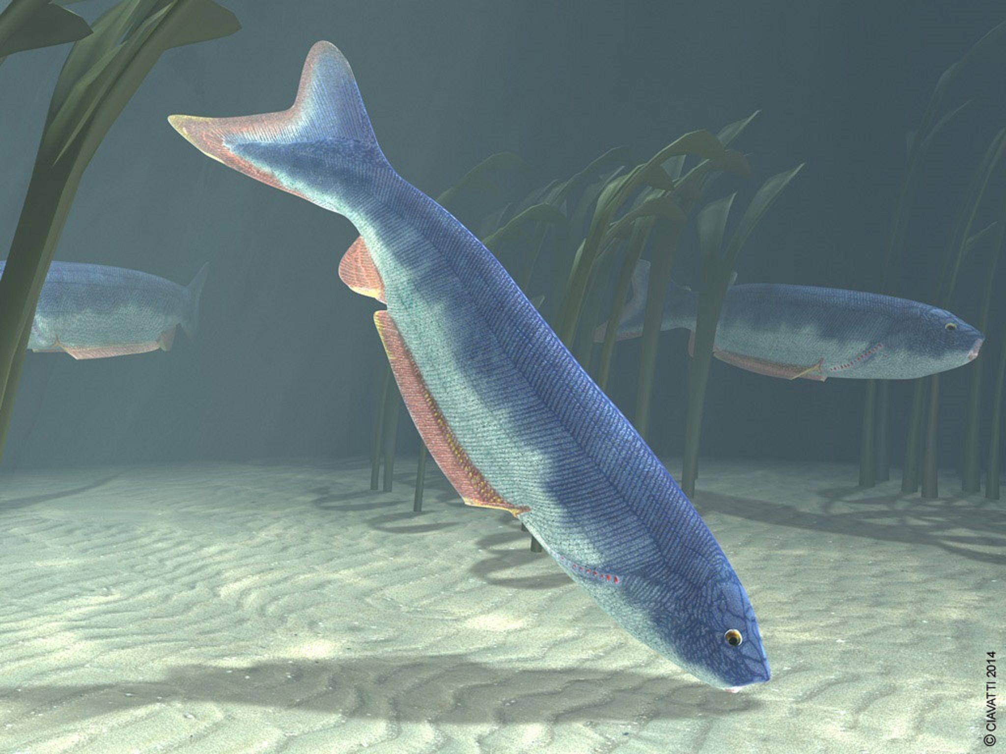 Ordovician period jawless fish