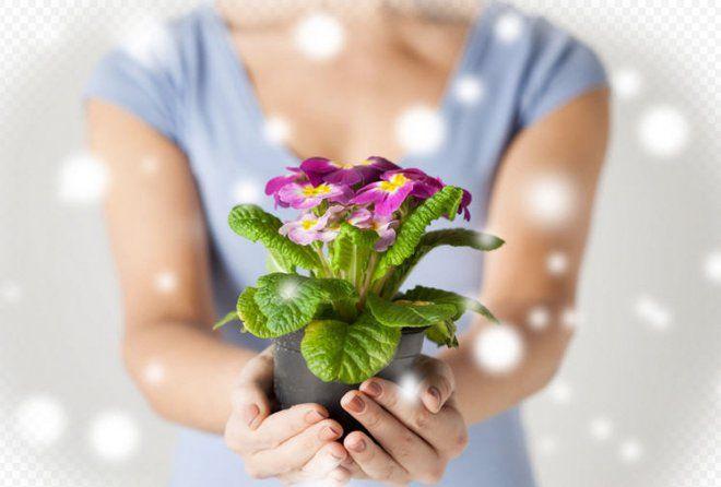 Дарить цветы или в кино