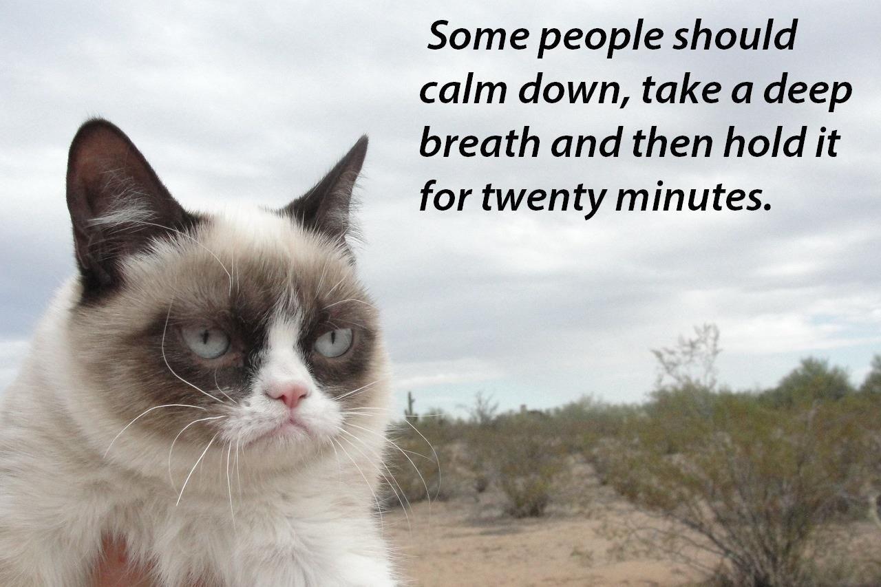 Grumpy Cat Video On Ellen