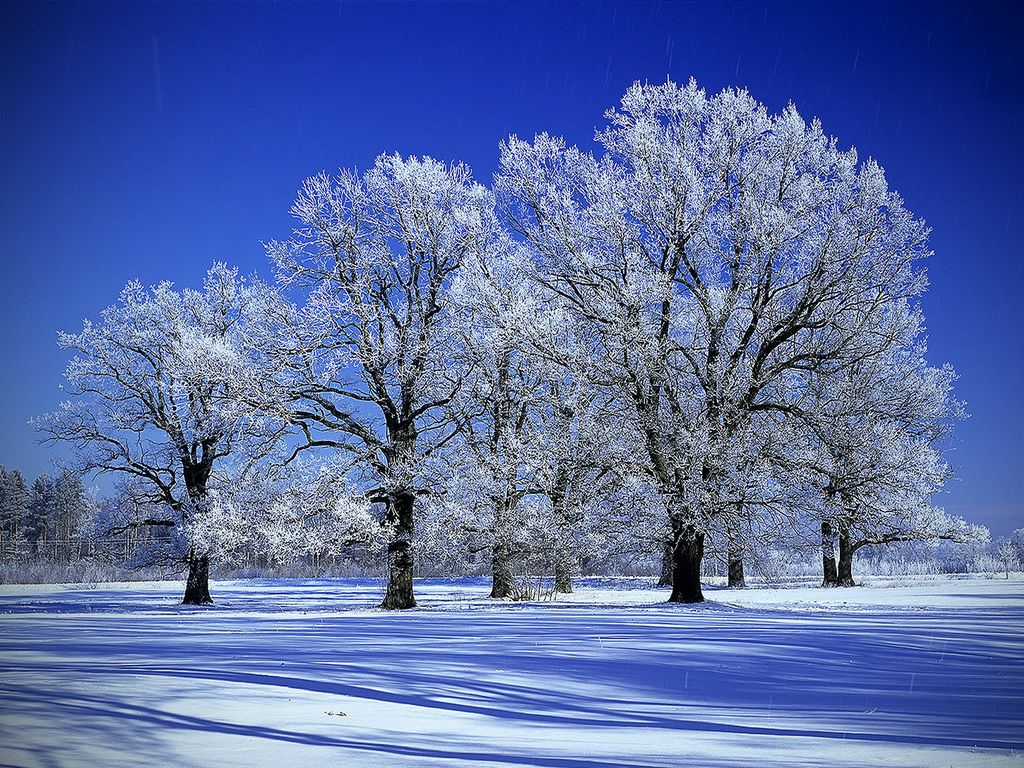 pin snow wallpapers trees - photo #21