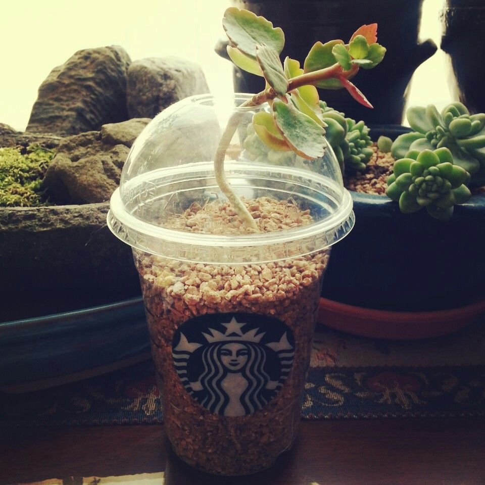 starbucks external environment This pestel analysis analyses the important factors in the external environment of starbucks and how they impact the business of starbucks.