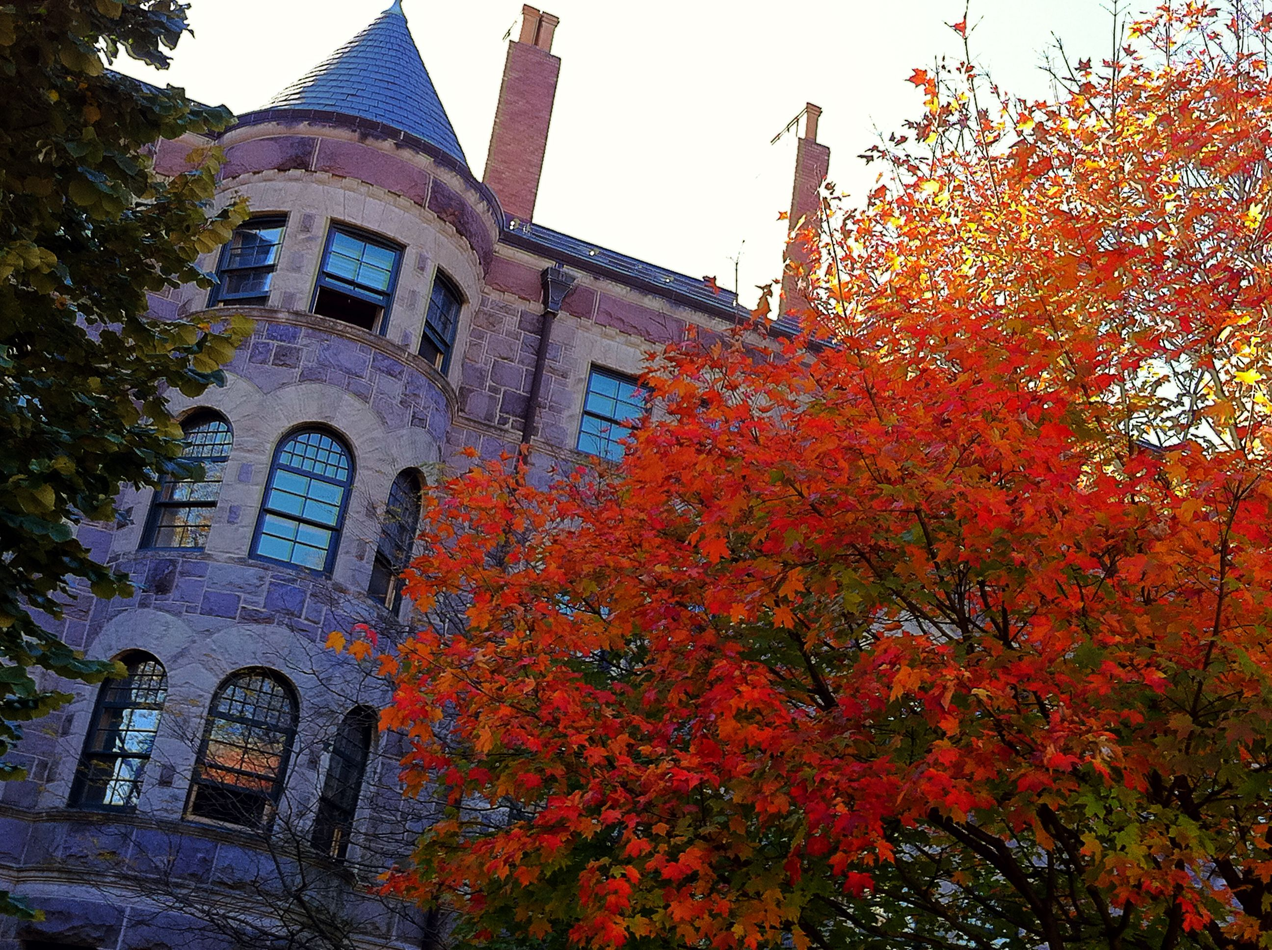 princeton university campus fall intellego