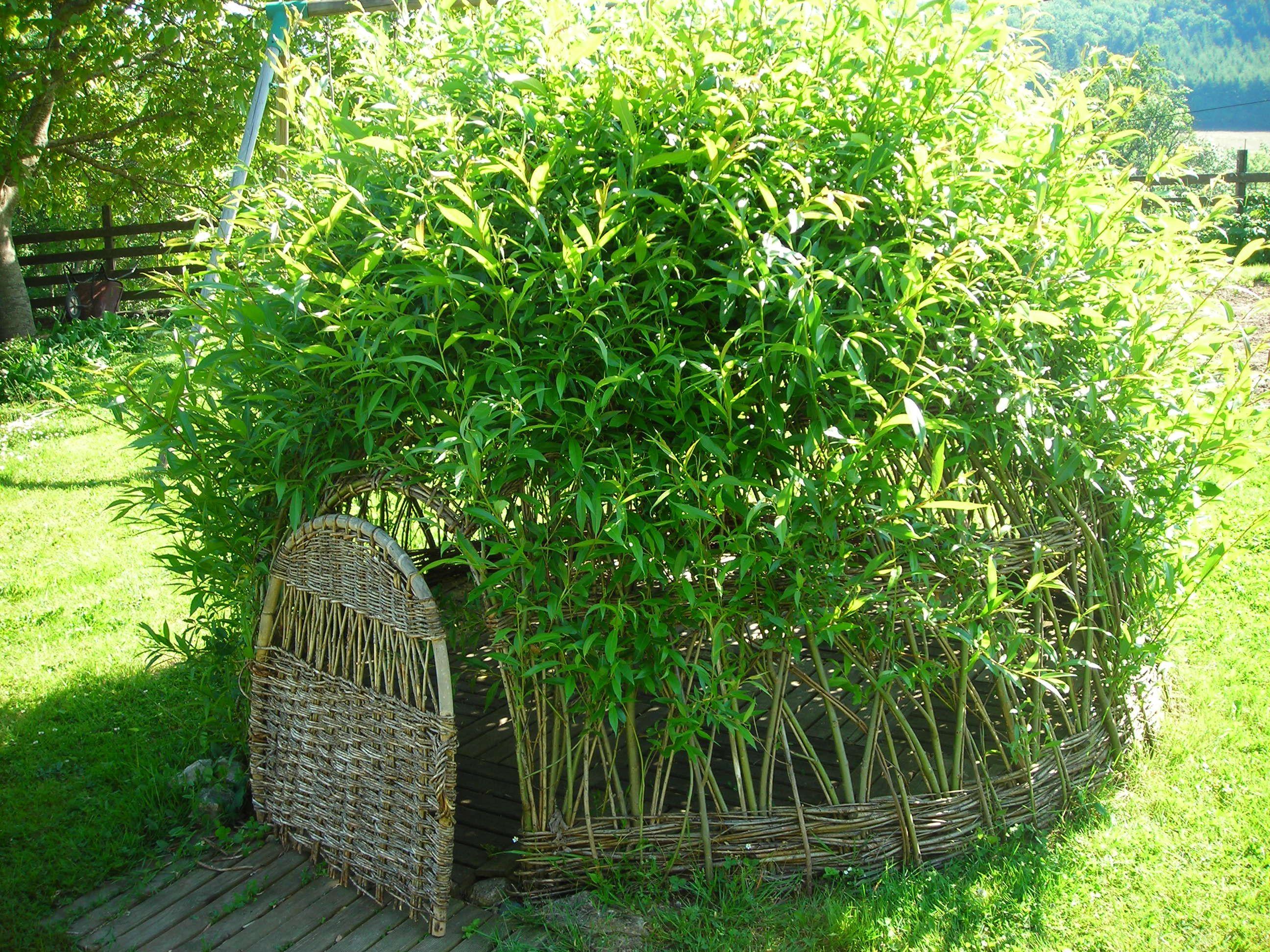 Osier vivant jardin jardins pinterest for Decoration osier pour jardin
