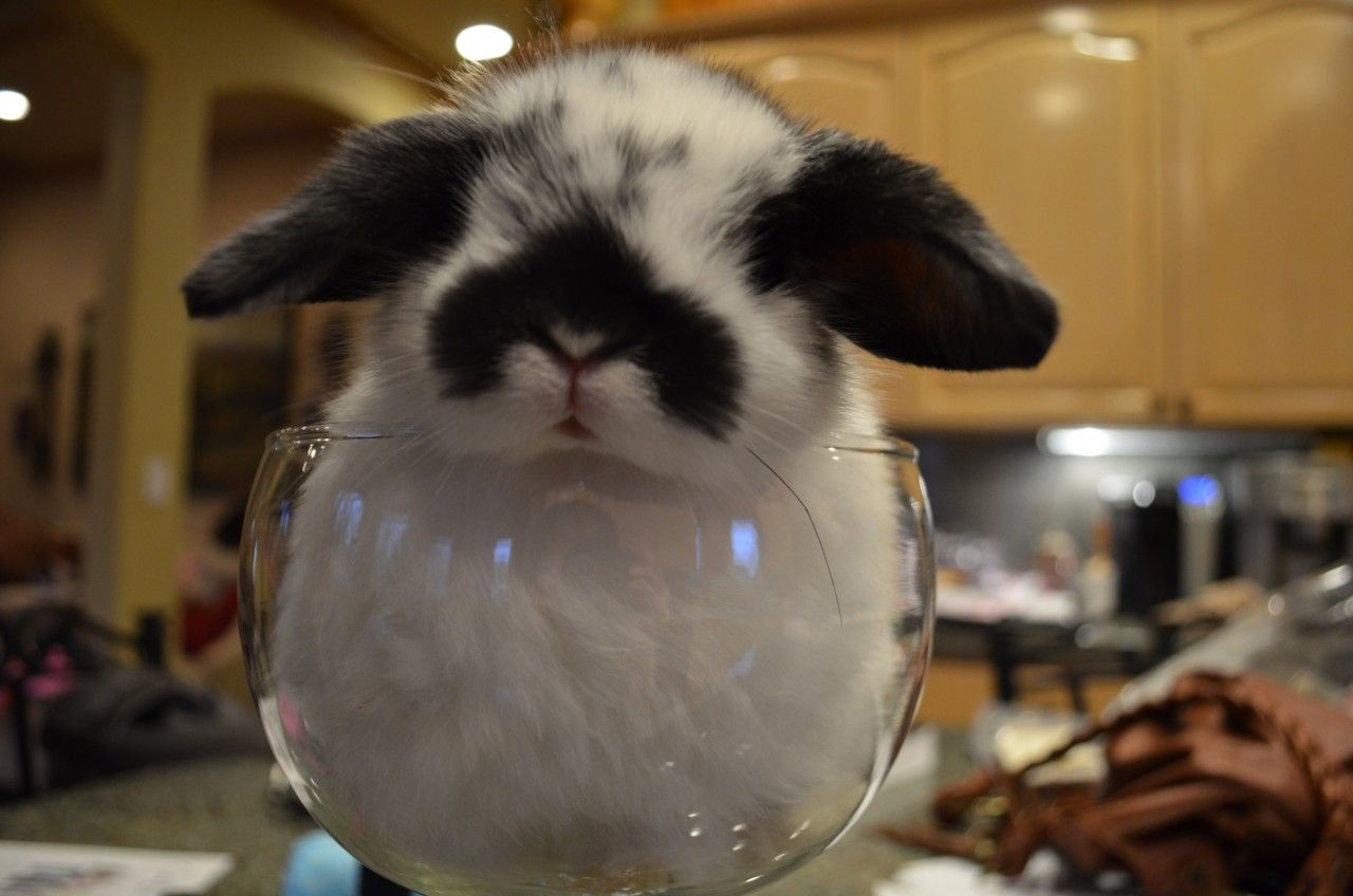 bunny wine glass the more people i meet the more i like rabbits. Black Bedroom Furniture Sets. Home Design Ideas