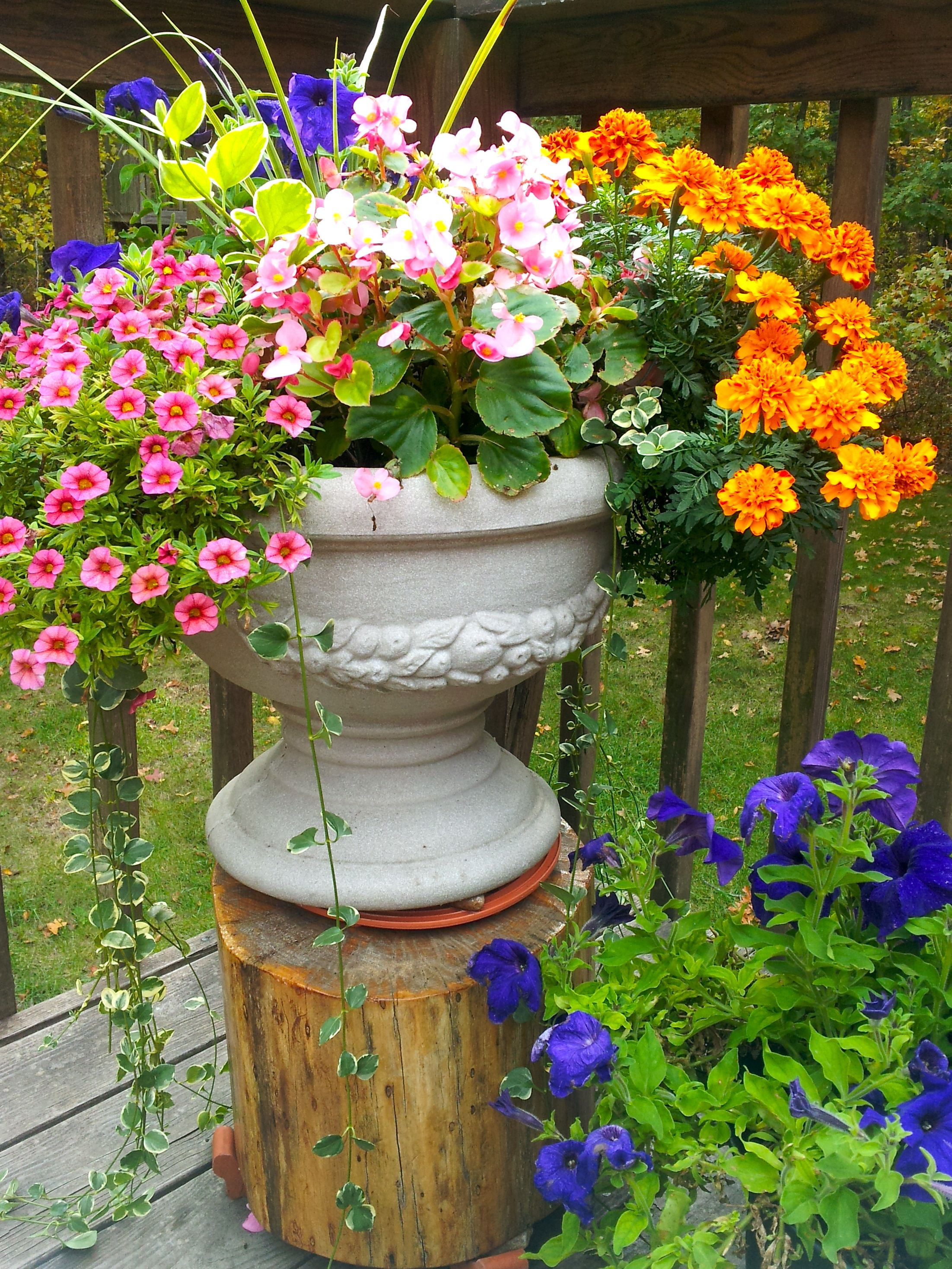 patio flowers on pinterest flower pots potted plants and petunias. Black Bedroom Furniture Sets. Home Design Ideas