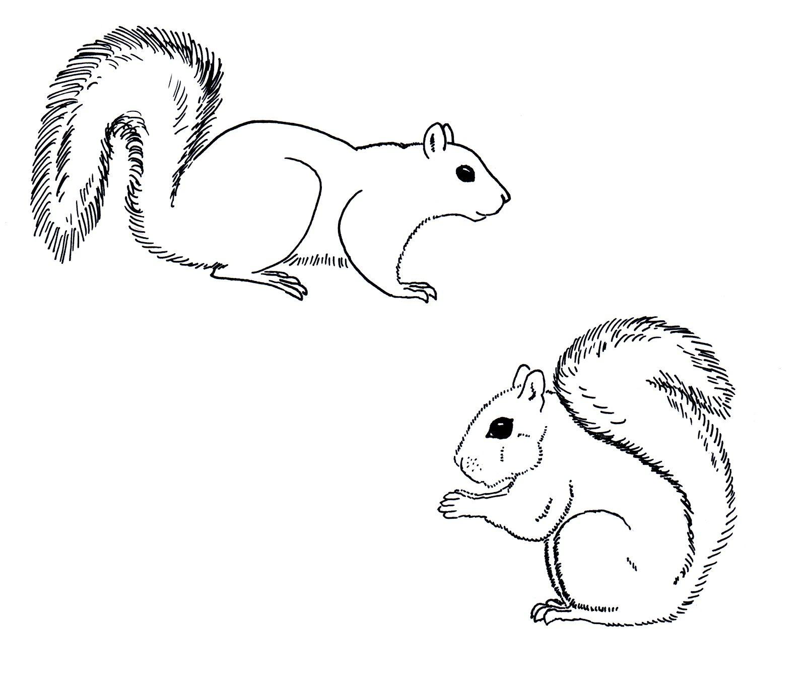 Line Drawing Squirrel : Squirrel line art google search animal vectors pinterest