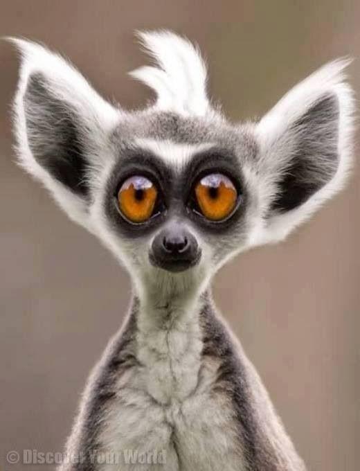 Madagascar!! :)   Animals   Pinterest