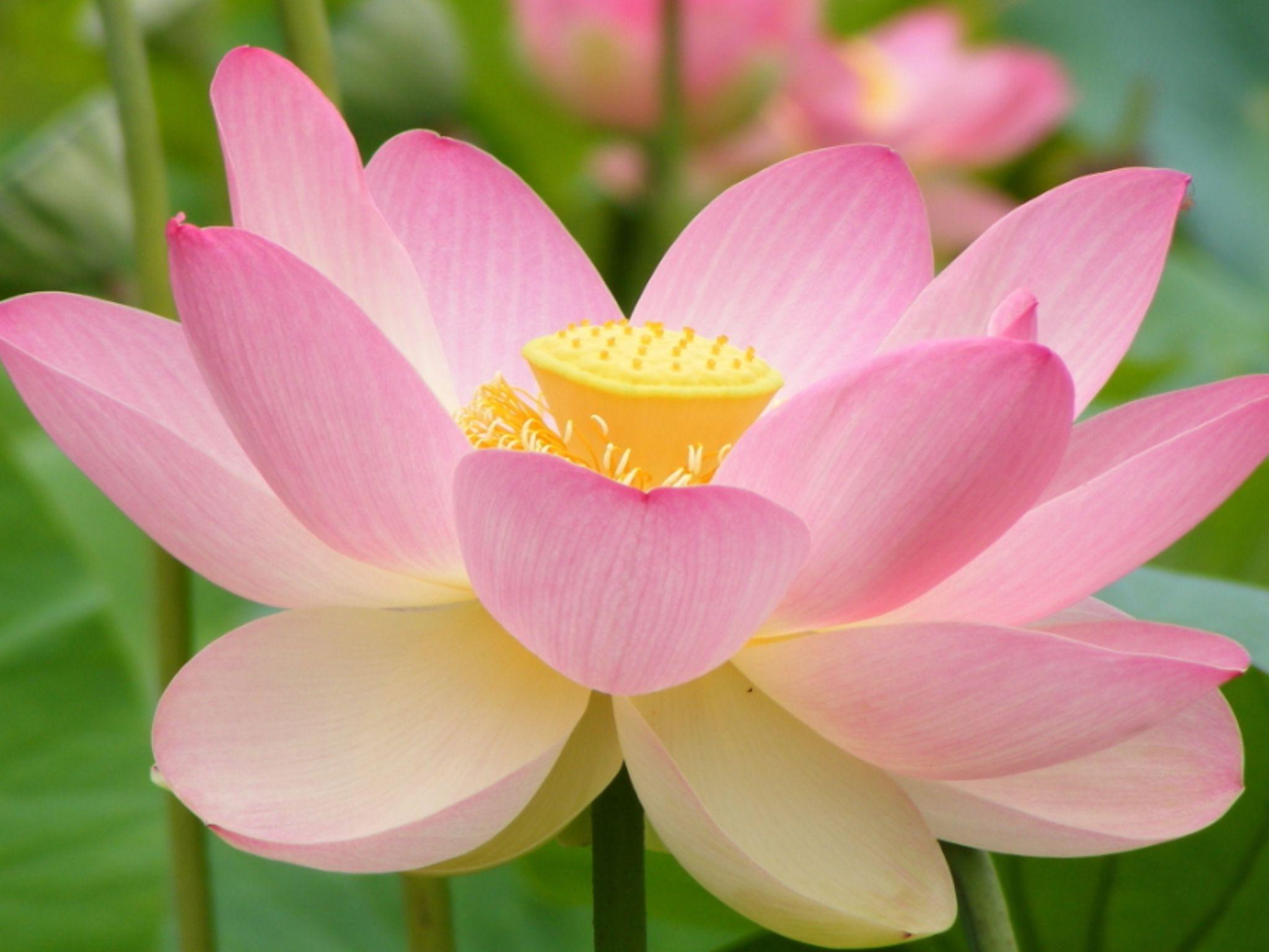 Beautiful unique flower flowers pinterest for Unique pictures of flowers
