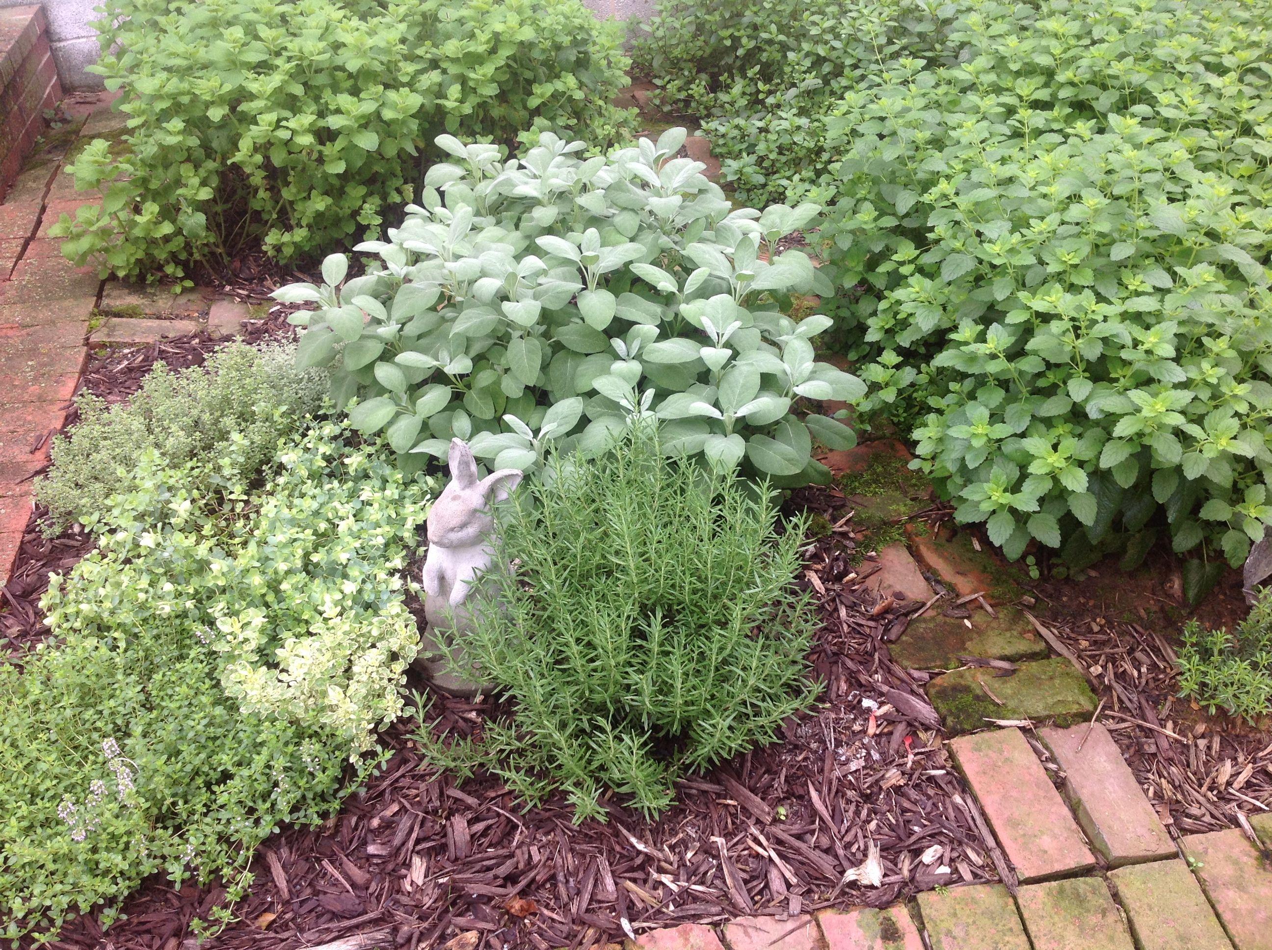 Kitchen herb garden slm gardening pinterest for Kitchen herb garden