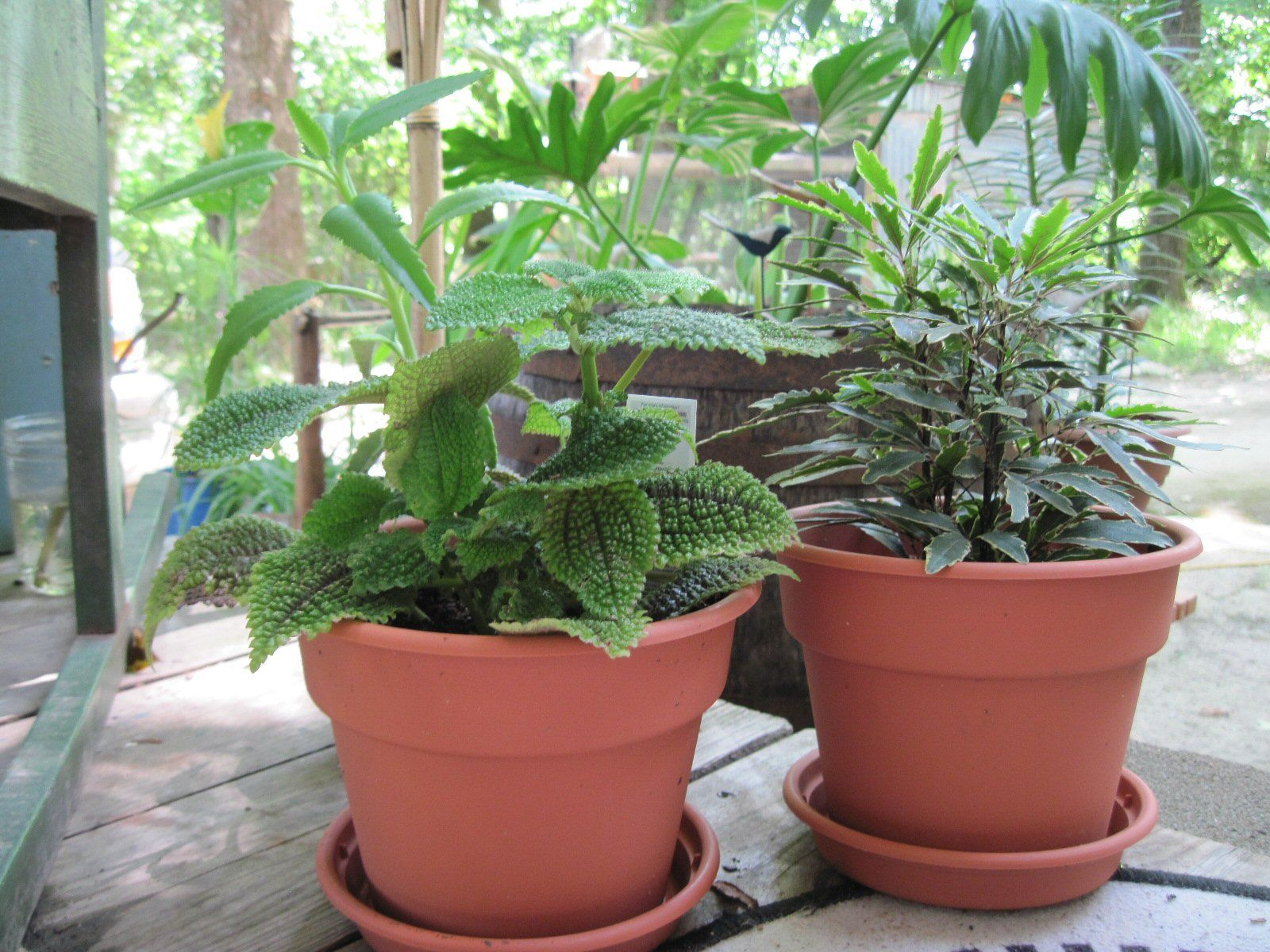 Spring Garden Containers