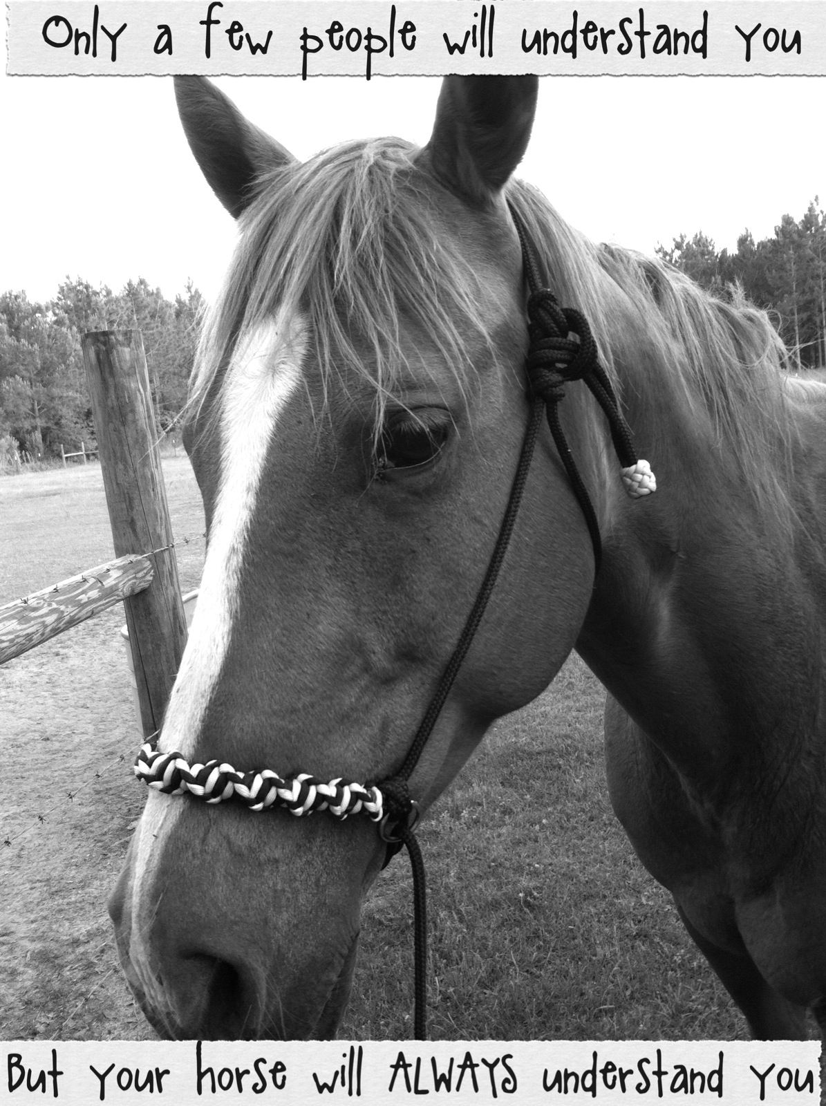 Horse quotes for girls pictures