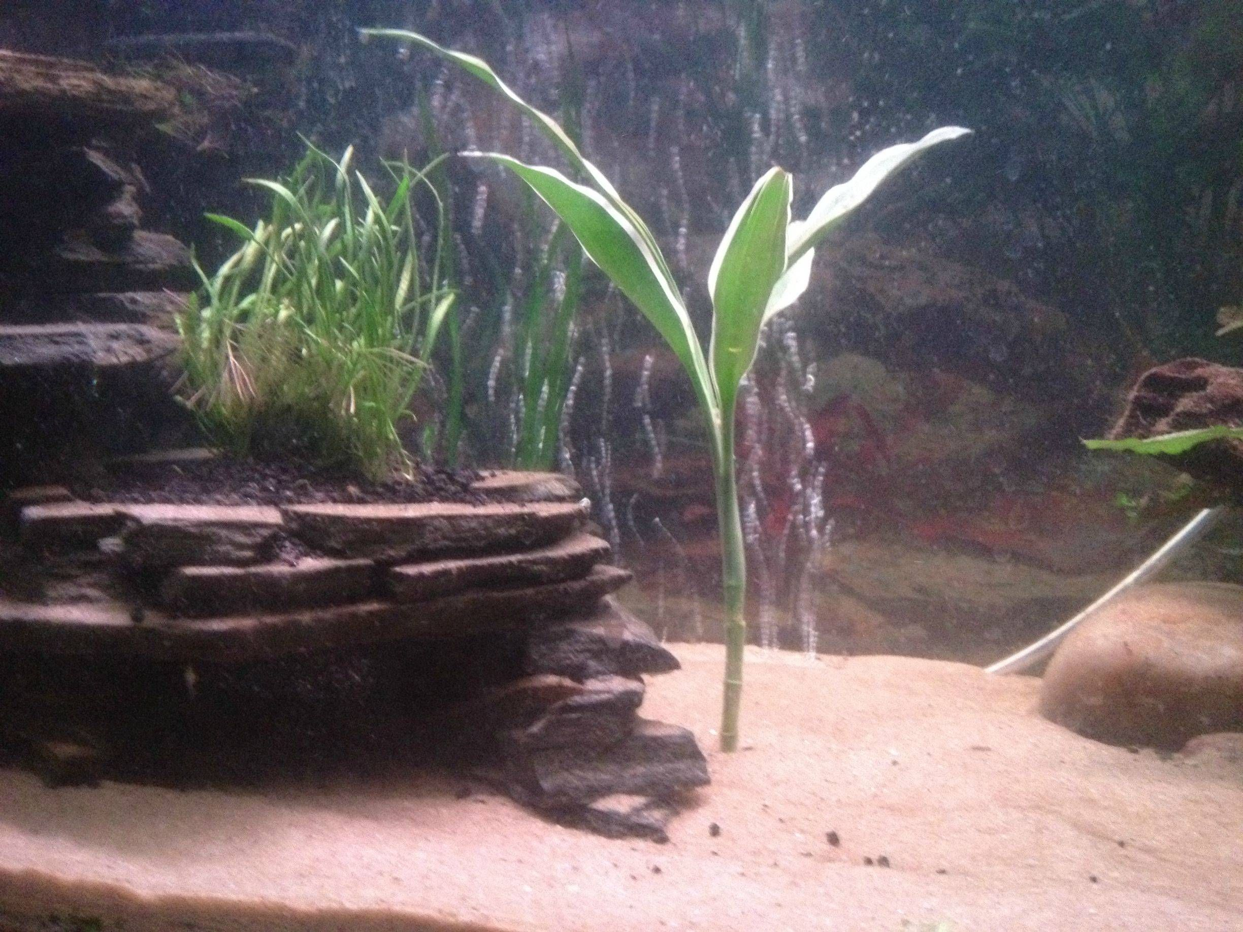 Diy slate wall planter fish pinterest for Fish caves for aquarium