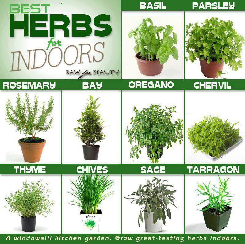 Natural Flavoring Indoor Herb Garden Pinterest