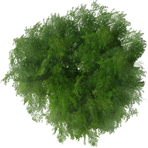 Top View Tree Png Free Download