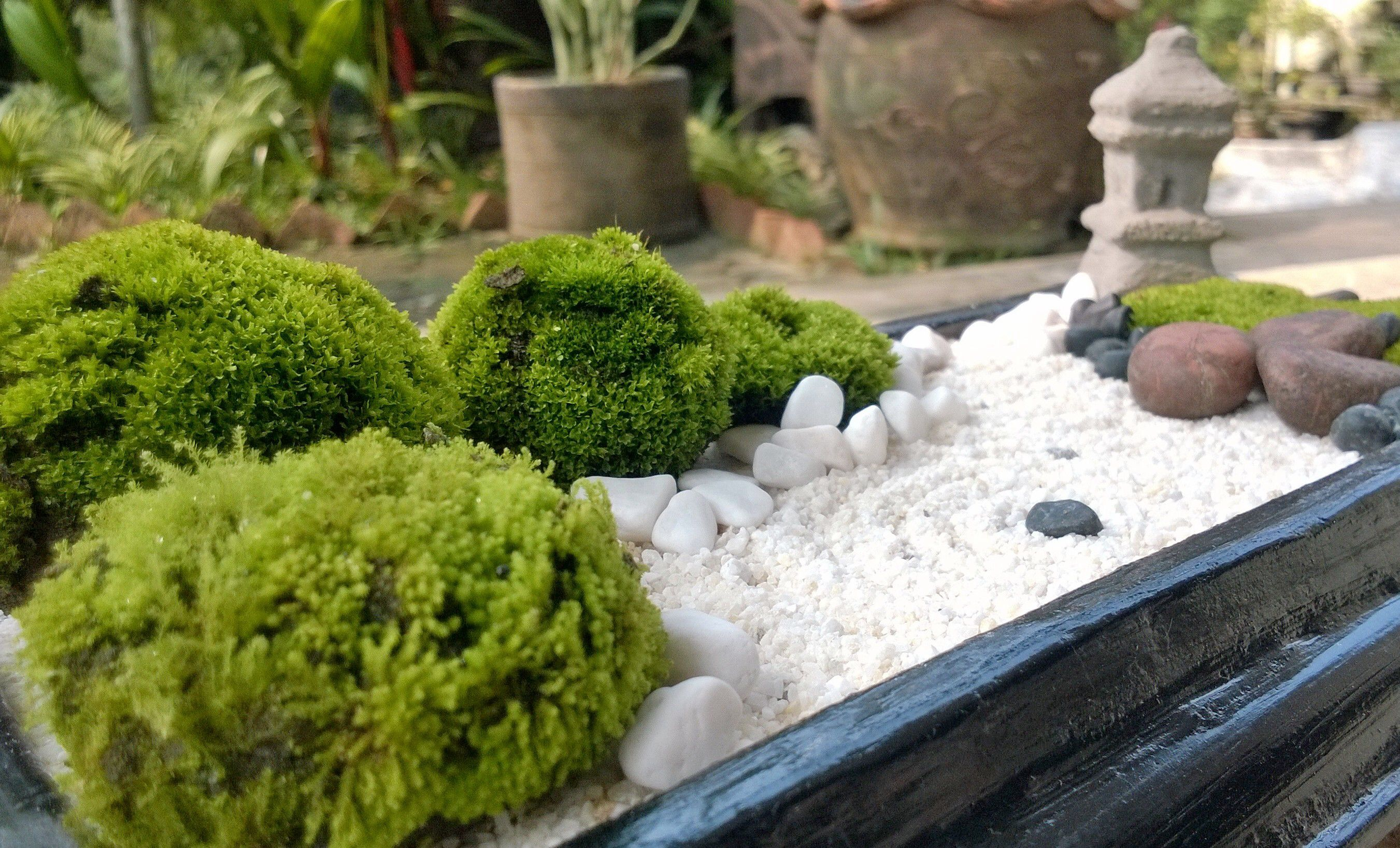white sand mini zen garden diy zen pinterest