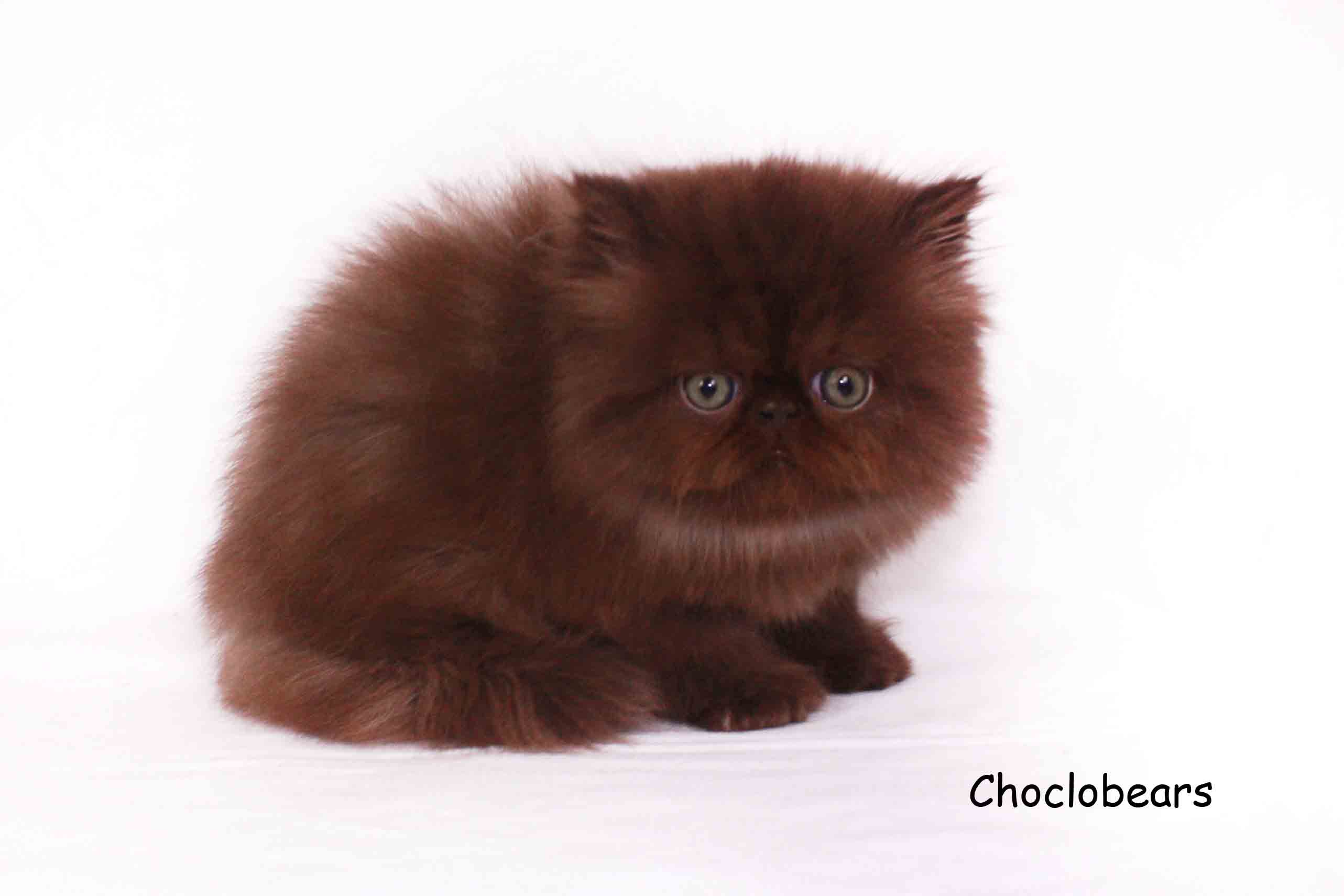 winslow cat dog