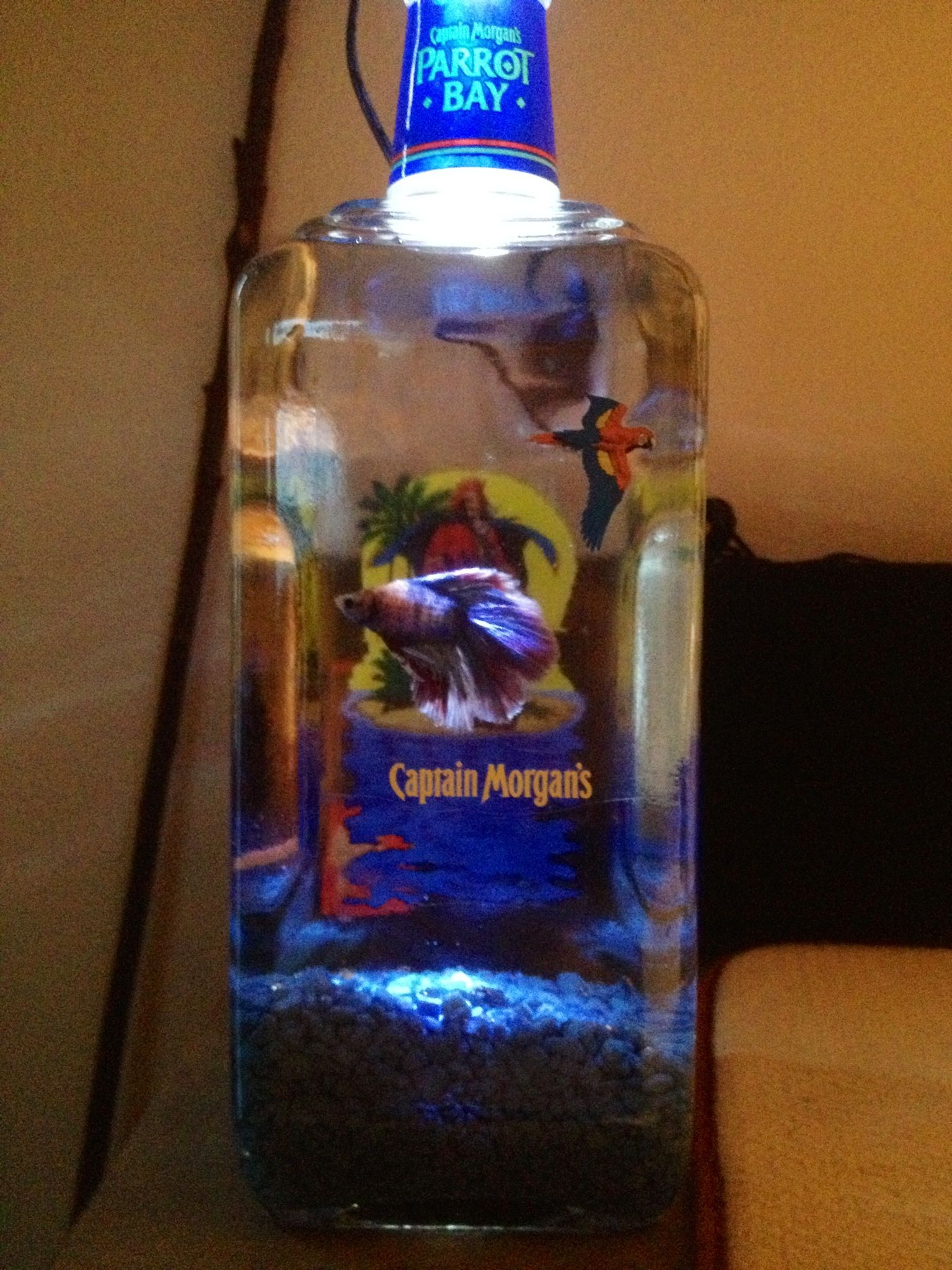 My cool ass betta tank bettas and fish pinterest for Awesome betta fish tanks