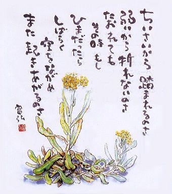 星野富弘の画像 p1_2